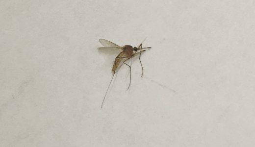 前世は蚊だと思う