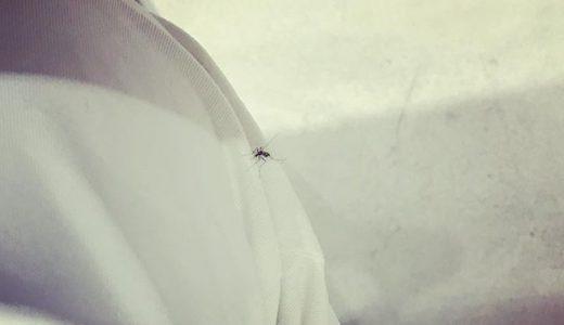 蚊撮 NO.05