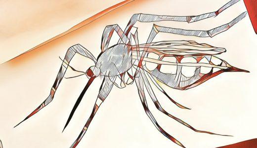 蚊はスタイルが良い