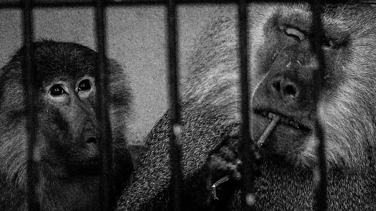 Zoo photo